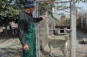 Treći po humanosti u Srbiji – Žabaljski azil za pse