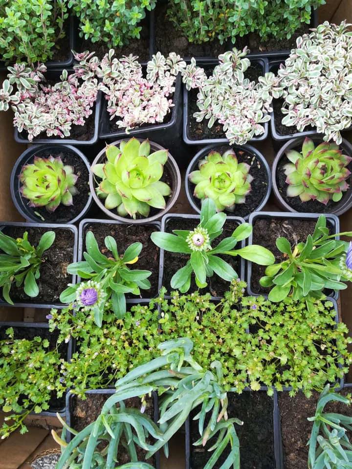 GOSPOĐINCI: Održan sedmi po redu Sajam hortikulture