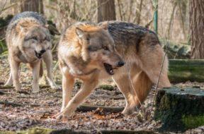 72474_wolf-1226703-1920_f