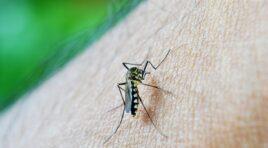 Tokom vikenda tretman za suzbijanje komaraca u opštini Žabalj