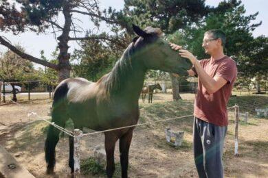 zabalj konji Milan Prisic (Atos Love) (1)